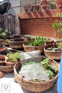 வீட்டில் செடிகளுக்கு உரமாக நாமே செய்யும் Compost....