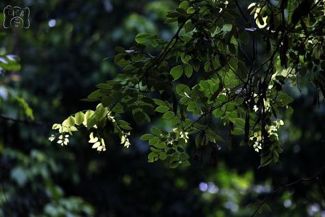 காலை வெயிலில் ஜொலிக்கும் மரத்துளிர்கள்....
