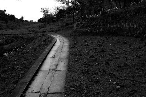 Brahmagiri hills