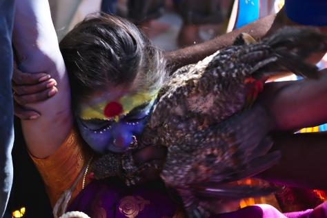 சாமியாடும் பெண்ணை கோழியின் ரத்தத்தைக் கொடுத்து சாந்தியடையச்  செய்கின்றனர்.